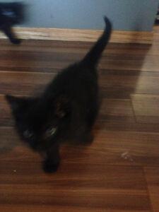 Kittens for sale $20