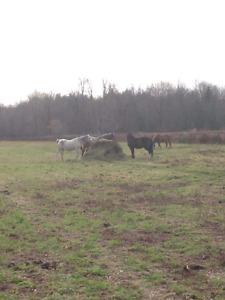 Pension pour chevaux a st lazare
