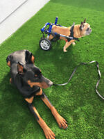 Dog Sitter Needed - June/July