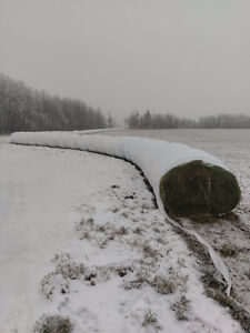 Hay for sale (high protein for cold weather)