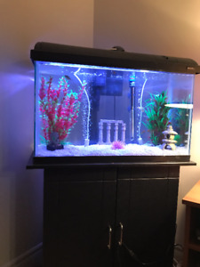 Fish Tank/Accessories/Stand/Fish for sale all together