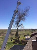 A CUT ABOVE TREE SERVICES HIRING IMMEDIATELY
