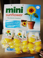 """Selling 20 Brand New Grow Your Own Mini 18"""" Tall Sunflowers"""