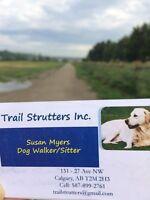 Energetic dog sitter/walker