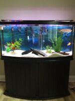 50 gallon tank with Arrowana for sale