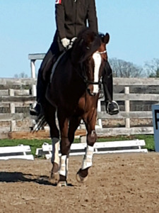 Equestrian Coach serving Port Dover and area