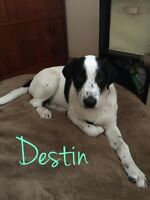 Destin is looking for his furever home- Liferaft