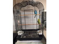 2 budgies girl and boy with cage for sale
