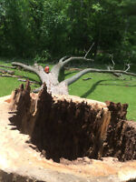 London Tree Cutting Services