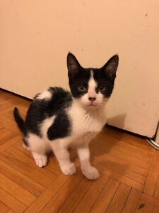 3 MONTHS OLD LITTLE KITTEN LOOKING FOR A HOME! (FREE!!)