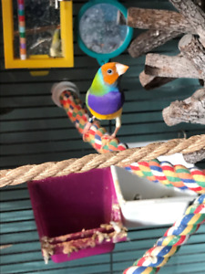 looking to trade 13 Gouldian finches for a puppy