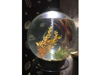 Biorb fish tank 60Ltr with stand