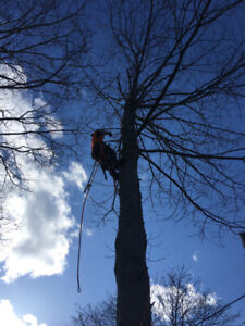 Tree removal services- cheapest call you'll make  (Free quote)