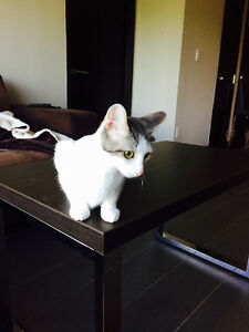 Kitten looking for a loving home