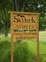 Only 2 stalls Available!! Horse Boarding