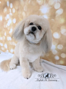 Dog grooming in kerr village animal pet services oakville dog grooming for small dogs in scarborough solutioingenieria Image collections