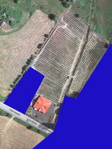 Langley Blueberry Farm And Marketplace For Lease