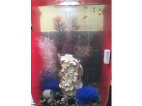 Biorb life 60 fish tank