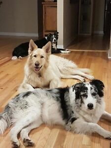 Dog Boarding / Sitting near Devon, Stony Plain, Spruce Grove