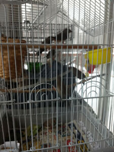 5 young zebra finches need a new home.
