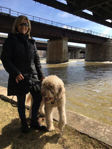 Dog Walking in the West Island of Montreal