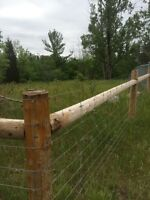 Farm, Livestock, Dog, Cattle, Horse, Property Fencing
