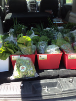 Fresh, Farm Direct Vegetables Delivered to Your Home!