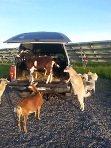 Herd for Sale WITH Solar Farm Subcontracting Opportunity!