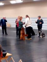 Crossroads Canine Connection--Daytime Dog Obedience Class