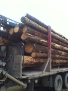 2 mixed loads of firewood.