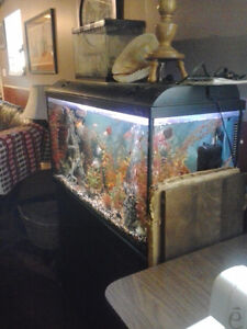 """Build a home for """"Dorey""""  (Beautiful Fish Tank for Sale)"""
