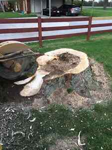 Affordable stump removal London Ontario image 4
