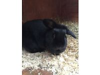 Female rabbit seeks experienced home