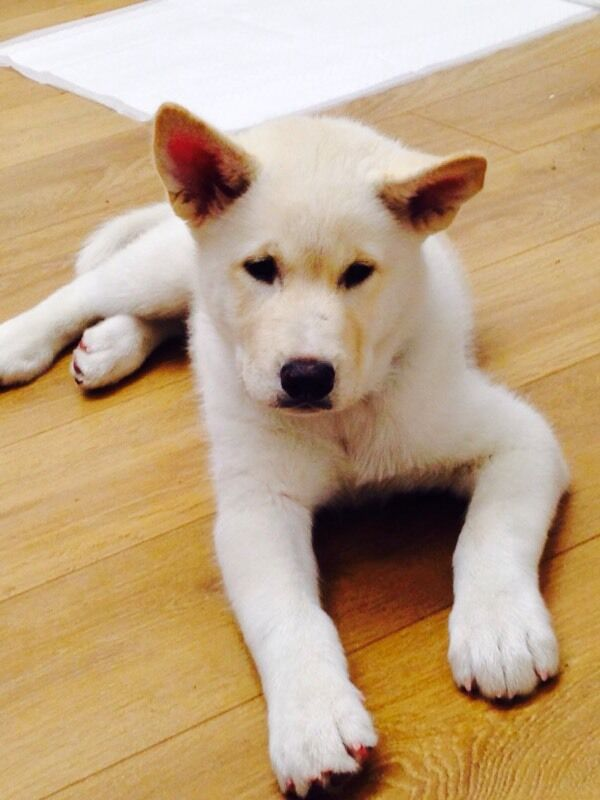Huskita Puppy For Sale In Brighton East Sussex Gumtree