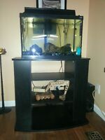 Fish Tank, Stand, Fish and Accessories
