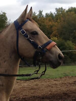 Gorgeous Dun Mare for sale or free lease