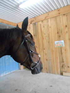 English Bridles for sale