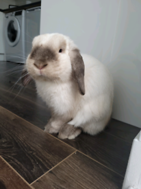 House Rabbit rehome