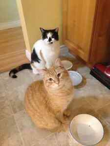 Mature cats free to good home