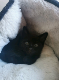 Beautiful black boys (£180 if collected today or tomorrow)