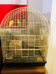 Parakeets with supplies and cage