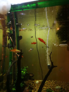 Around 60 small fish for sell