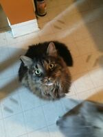 Female Kitty looking for a forever home