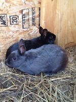 Two small eared bunnies with everything they need!