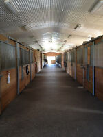 Horse Boarding - 10 Minutes West of London
