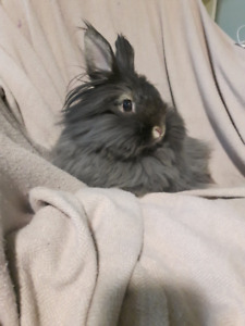 Looking to Rehome my Female Rabbit