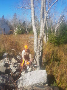 Professional, fully insured Tree Services and yard work in HRM