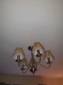 Gold 5 shade light