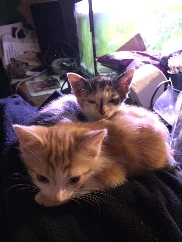 Kittens x 2