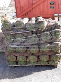 Turf rolls fresh cut today